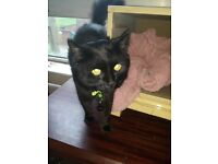 Missing black fluffy cat
