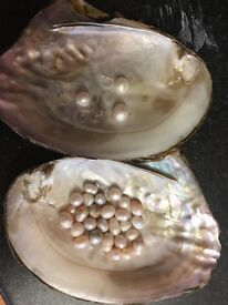 Akoya oyster containing pearl