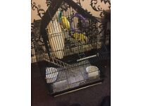 Budgie cage for sale £50 or best offer