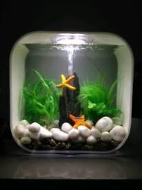 Biorb 30L fish tank