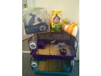 Lovely, healthy, three month old hamsters £25 inch.