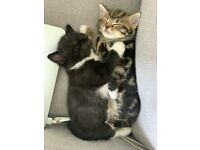 Kittens looking for their forever home