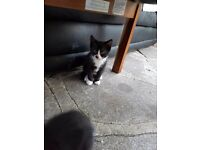 Playful little kitten needs a new home