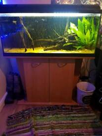 Fishtank with stand (full set up) REDUCED