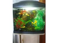 Coldwater fish setup