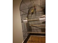 Budgie cage with budgies