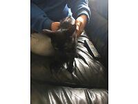 14 week old kitten