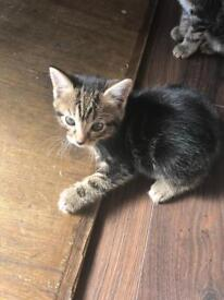 2 Male Kittens (RESERVED)