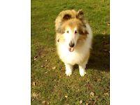 Dog walker in Earley Reading