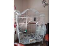 Cockatoo for sale 16 month old with large cage bought for my disabled son but he wont go to him