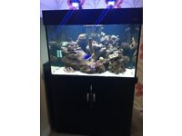 Aqua one 300 black marine/tropical fish tank aquarium with setup