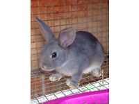 Bunnies in need of home - Bunny Rabbits ready to be rehomed now PRICE REDUCED TO CLEAR