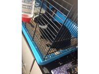 Baby rabbits for sale black and white
