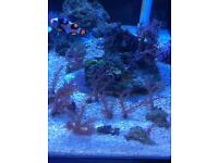 Various marine corals from £5