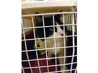 Found. Black and white cat