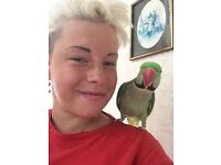 Lost Alexandrine 10 years old spike he help me with my illnesses and is a massive help