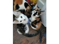 5 Kittens Looking For New Loving Home