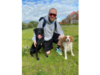 Dog walker and trainer (Ingleby Barwick Based)