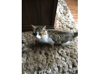 Female Cat FREE TO GOOD HOME