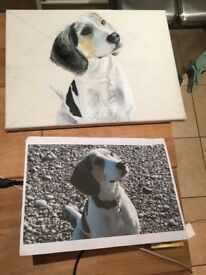 Pet Portraits / Paintings High Quality Oil Painting Dogs Cats Animals