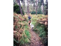 Run with the Pack - Dog Walking/Running in the Woking area