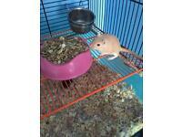 Gerbil cage and 3 female gerbils