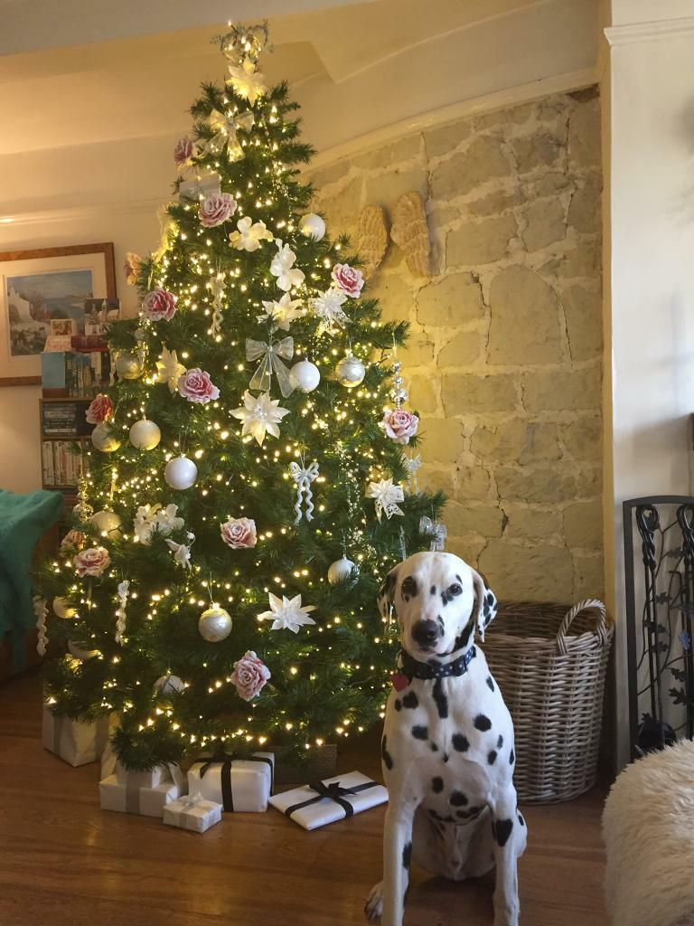 Lovely 7 Foot Christmas Tree Sold In Liss Hampshire Gumtree