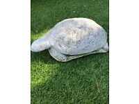 Garden tortoise