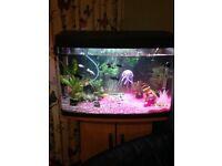 Love Fish Panorama Tank 64 Litre