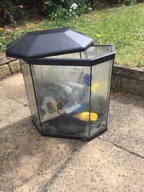 Small starter fish tank.