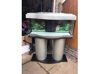bowed front fish tank and stand full setup