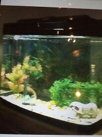 Fish tank job lot