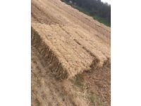 excellent quality conventional straw bales