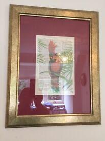 Parrot Picture Print