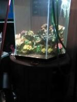 35 gallon hexagon tank best offer