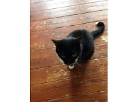 mature female black and white cat needs new home