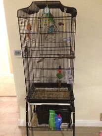 Two budgies & cage