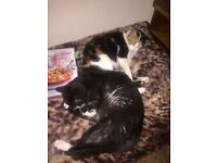 Two x Cats Free to good home