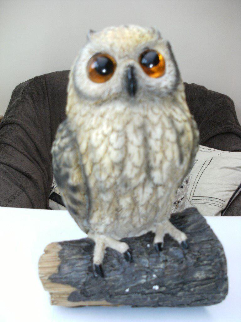 SOLAR OWL GARDEN LIGHT (Brand New U0026 Boxed) | In Longwell Green ...