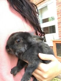 1 x baby rabbit