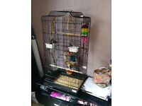 Four young zebra finches and large cage