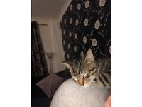 Kitten for re homing - 5 months old