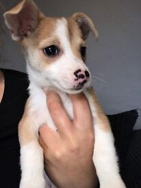Puppy for sale