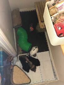 Baby Rabbits, Bunnies