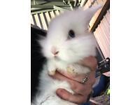 Baby rabbits x4