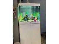 Juwel lido 120 white tropical marine cold water fish tank aquarium (Drivery install