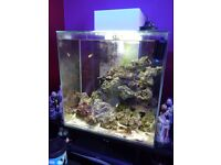 Fully functioning marine fish tank - to go ASAP