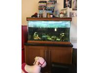 Fish tank with full set up and fish included