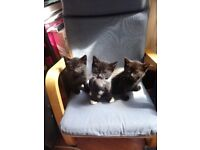 3 friendly, playful kittens for sale!