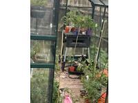 Aluminium dark green framed green house